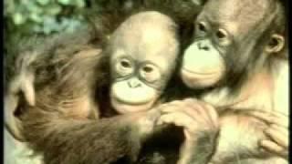 KERUNTUHAN TEORI EVOLUSI (Harun Yahya Bahasa Indonesia) Video