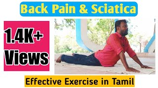 Download Back Pain & Sciatica   Home Effective Exercise in Tamil   Prince Ballads