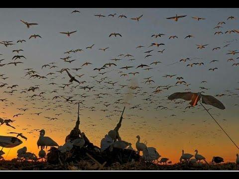 Охота на гуся.Весна