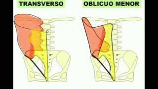 Pared de abdomen 1.flv