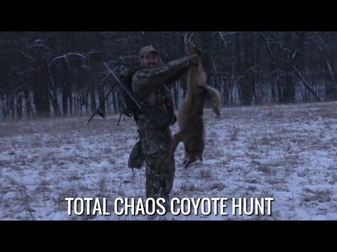 Total Chaos Coyote Hunt