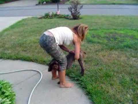 Expressing A Dog S Bladder