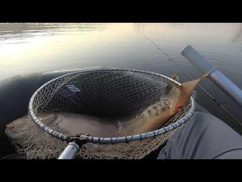 Ловля коропа та щуки на грушку і пульку на річці Збруч