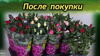 Растение из магазина. Что обязательно нужно сделать после покупки цветка.