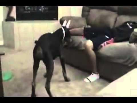 Собачка укусила за пенис пацана