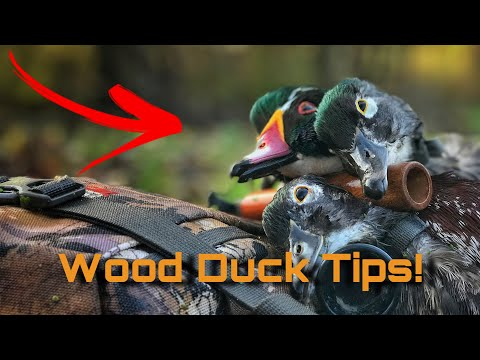 6 Tips For Wood Duck Hunting