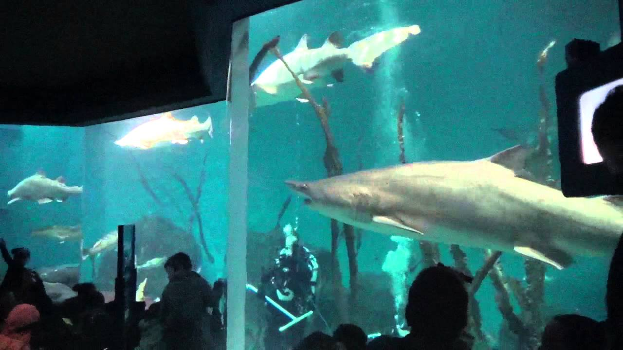 The Maritime Aquarium Experience Norwalk Ct