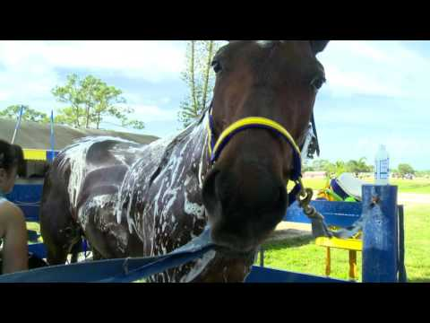 Tack to Track presented by Jacks – Bathing a Horse