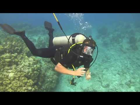 LIVE Scuba Dive in Grand Cayman