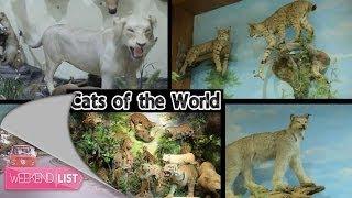 Weekend List-Rahmat International Wildlife Museum