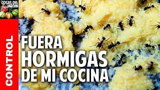 como eliminar hormigas de la cocina aniquilamiento organico total sin venenos cosasdeljardin