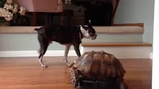 Turtle Riding Dirty Vine - A Funny Vine on FunnyVineVideos.com.mp4