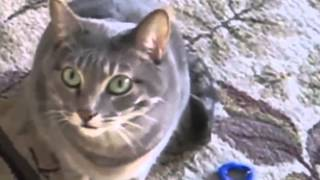Cat singing rock compilation