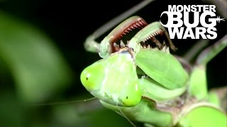 Giant Rainforest Mantis Vs Spiny Leaf Insect | MONSTER BUG WARS