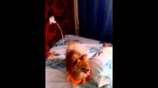 Порнуха собаки(, 2015-11-02T22:31:16.000Z)