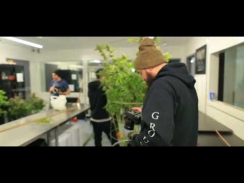 HiGH GROUP  X  House of Cultivar