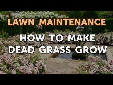 How to Make Dead Grass Grow