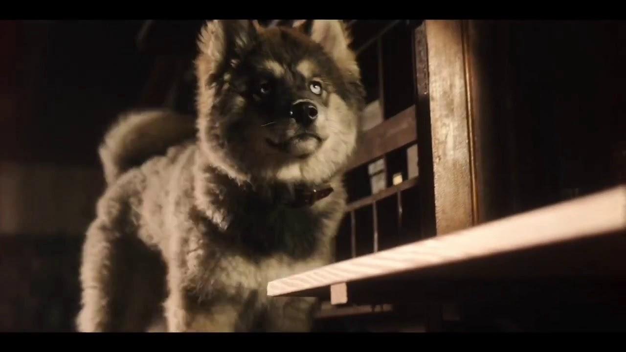 Download Togo as a puppy | togo movie