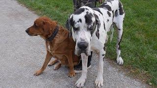 Videoumfrage in Wien: Soll es strengere Regeln für Hundehalter geben?