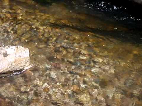 Bonneville Cutthroats On Fish Haven Creek--Bear Lake