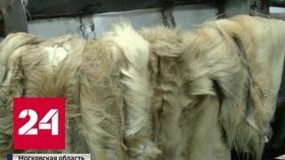 Беспредел на меховой фабрике: белый медведь в холодильнике