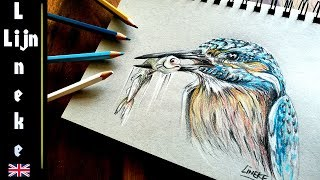 Drawing a Kingfisher with prey in Color Pencil - realistic result