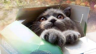 Смешные коты кошки и другие животные Funny Cats – НЕ РАЗРЕШАЕТСЯ ТОСКОВАТЬ ПО НАСТОЯЩЕМУ КОМИЧНО