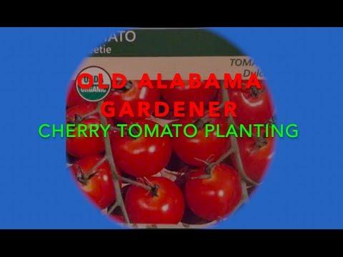 CHERRY TOMATO GROWING - *SECRETS* ON HOW I DO IT (OAG)