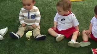 Los bebés también disfrutan con los pollitos en *Escuela Infantil Pecas* MOV