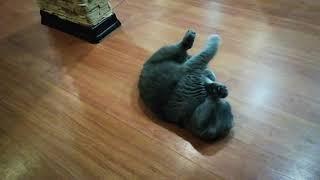 Как удовлетворить кошку или, что делать если нет поблизости кота...