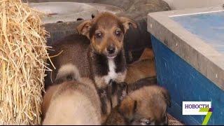 В Одессе спасли полсотни бездомных щенков