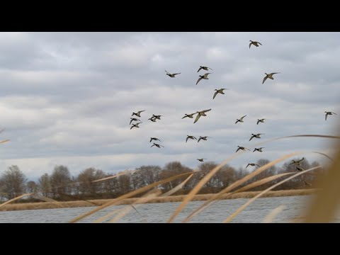 Duck Hunting BIG WATER! (DIVERS AND MALLARDS!!)