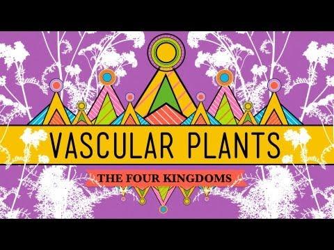 Vascular Plants = Winning! - Crash Course Biology #37