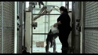 БЕСТИАРИЙ [фильм снятый с точки зрения животных] 2012