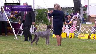Pointers German Wirehaired | Breed Judging 2021
