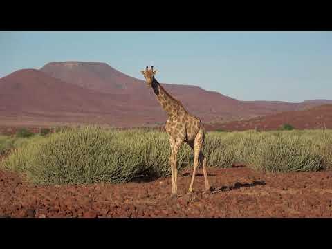 Namibia Motorradreise 2018 Impressionen, Gravel Travel, DJI Spark