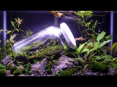 Worlds First Closed Terrarium in an Aquarium