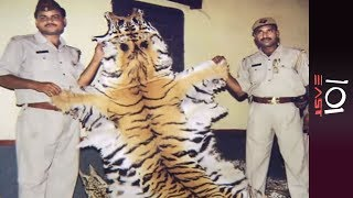 India: Last of the Tigers