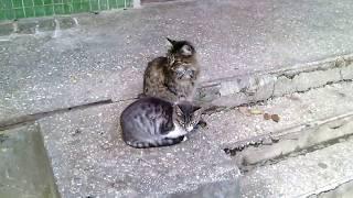 Два милых котика. Замедленное воспроизведение сидячих котов. Прикольно шевелятся кошачьи уши