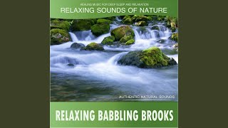 Calming Babbling Brook to Soothe your Soul