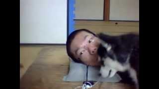 ニコニコ動画で子犬と一緒に放送してみました♪ ニコニコ動画のコミュニ...
