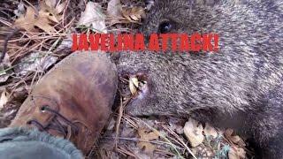 Gambar cover JAVELINA ATTACK!!