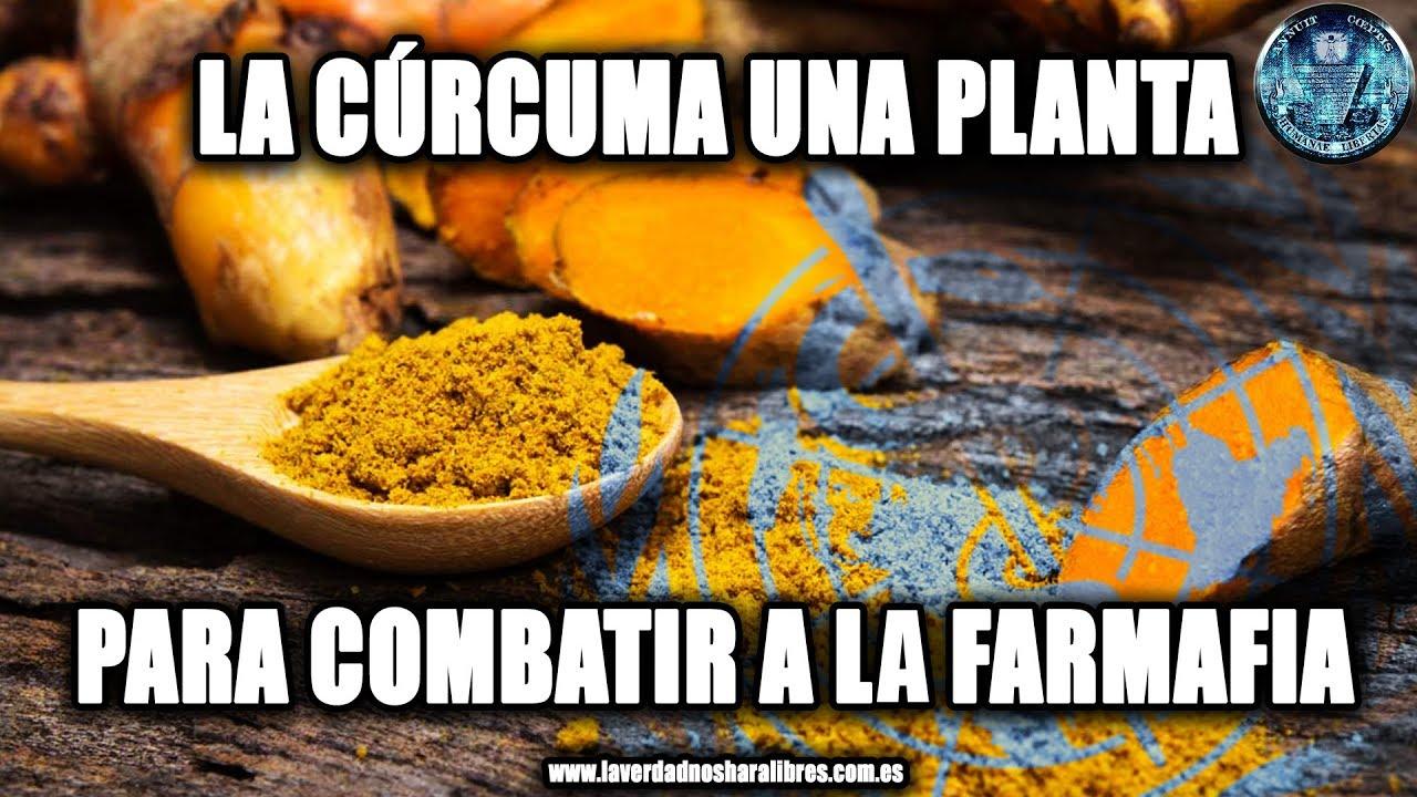 LA CÚRCUMA, UNA PLANTA PARA COMBATIR A LA FARMAFIA