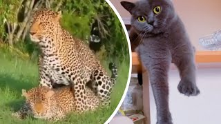The Most Ridiculous Wild Mating | Funny Domestic And Wild Animals' Life | Animal Videos Compilation