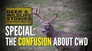 the confusion about cwd