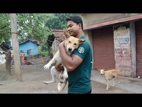 Saving Street Dogs In India Youtube