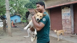 Saving Street Dogs In India