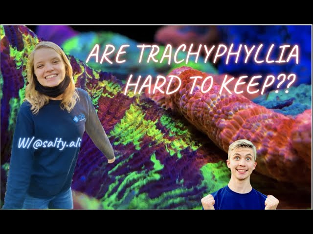 HOW to KEEP Trachyphyllia in my REEF TANK!!! ( Insane Trachy )😱