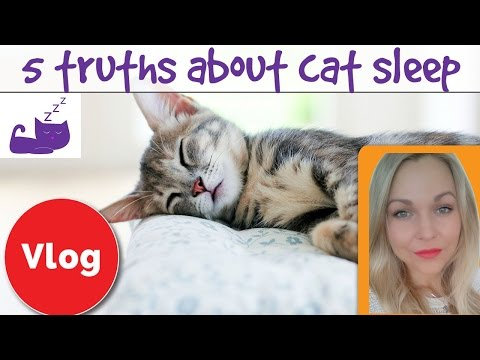 Why do cats sleep so much? 5 truths about cat sleep