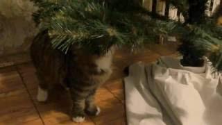 котенок под елкой